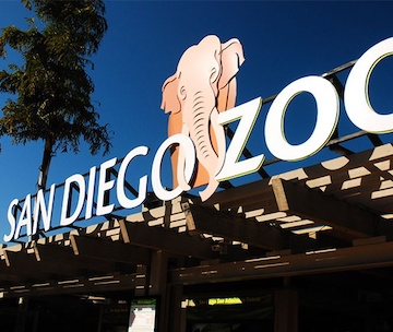Cloud of Goods at San Diego Zoo